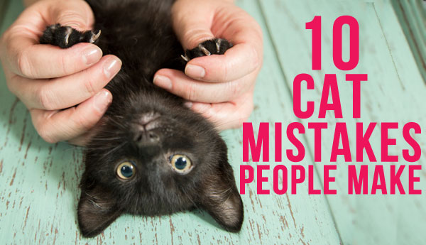 10-cat-mistakes-people-make