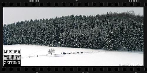 Schlittenhunderennen in Schmallenberg/Sauerland 2006