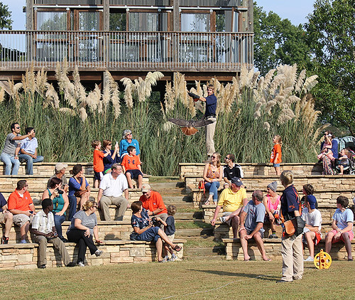 Auburn's 'Football, Fans and Feathers' raptor show expands ...