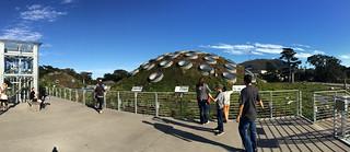 Neighborhood Days - California Academy of Sciences Living Roof pano