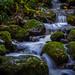 Mosquito Creek, N. Van by Daniel G Photography