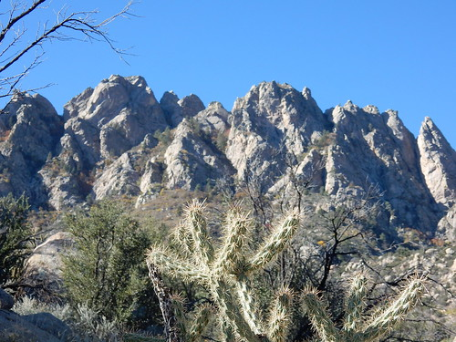 Aguirre Spring Campground - pine tree hike - 4