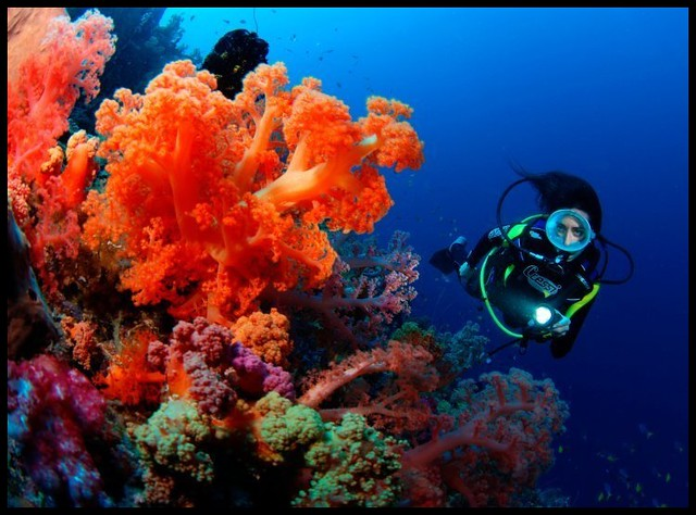 潛水Soft-Coral-Scuba-Diving-Fiji-Waidroka