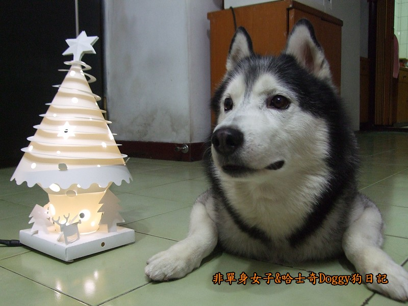 Doggy與紙箱王聖誕樹造型燈飾組10