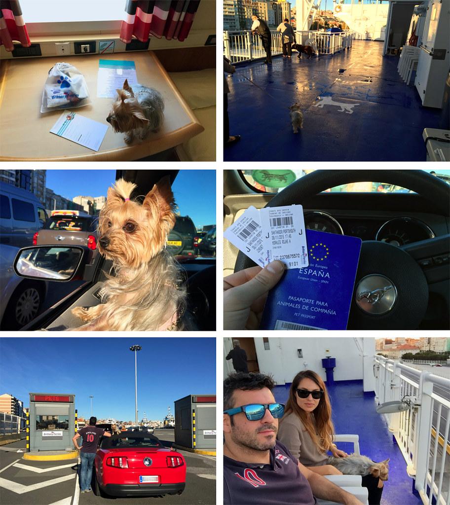 Viajar con mascotas a Reino Unido: Llevar mascotas a Reino Unido viajar con mascotas a reino unido - 23550816552 f07481f707 b - Viajar con mascotas a Reino Unido desde España