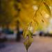 Fri, 12/11/2015 - 16:12 - Another leaf