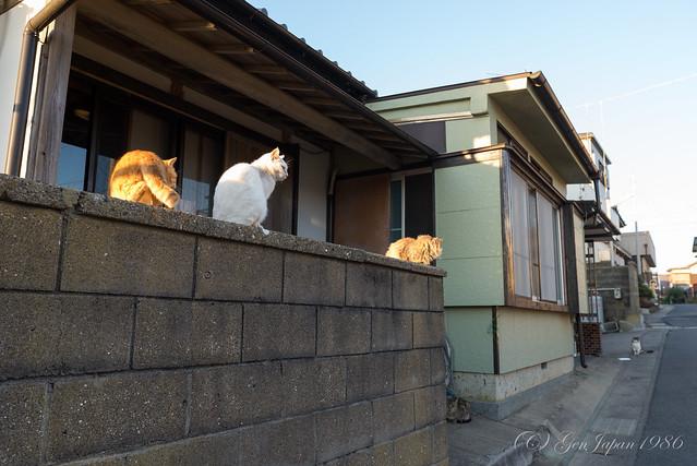 銚子 ネコ
