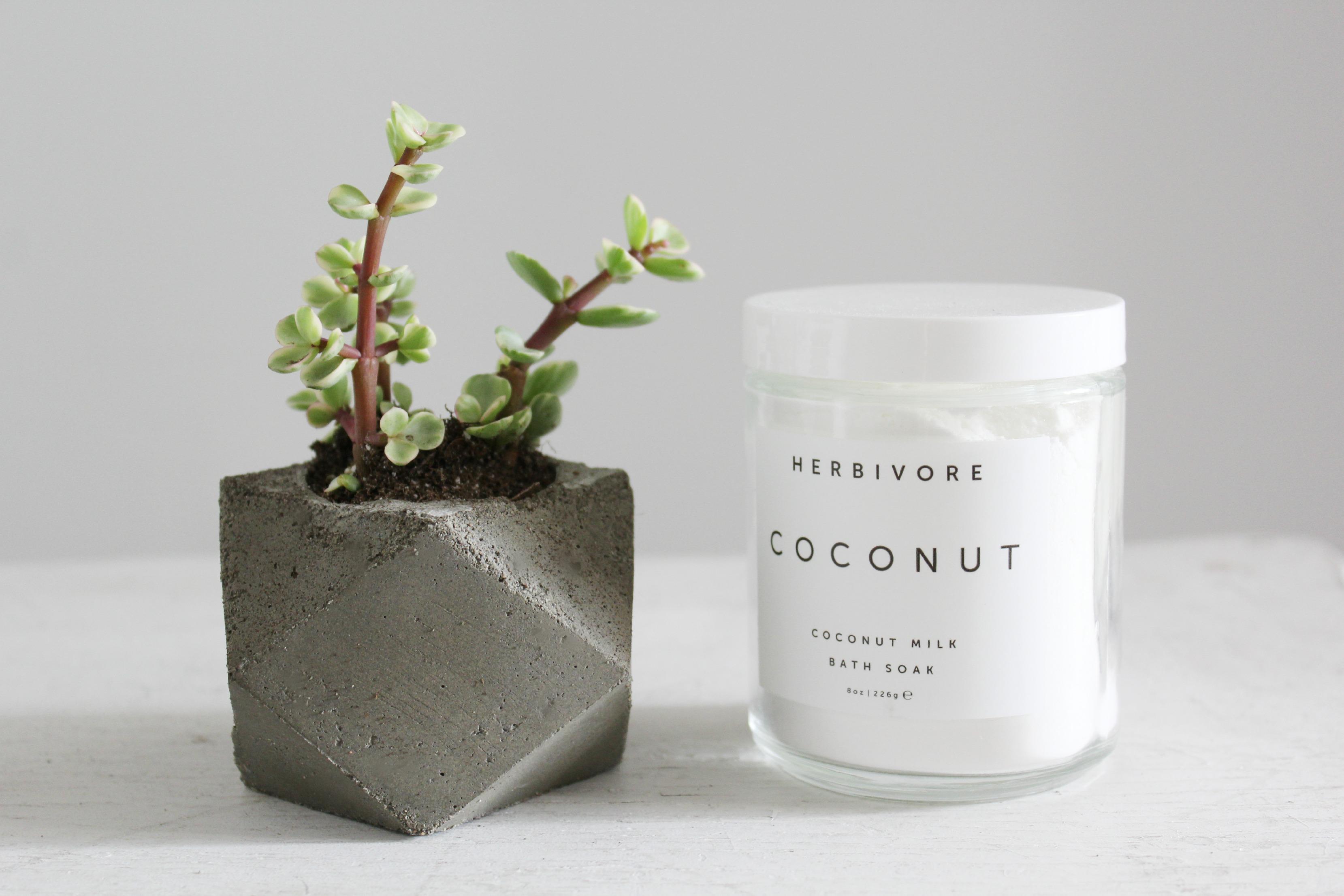 herbivore botanicals & succulents // gingersnapsblog