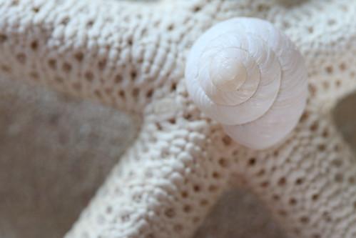 The Little Snail Shell (SOTC 185/365)