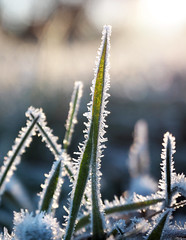 The touch of frost