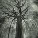 Under the Oak by Bucka Stone