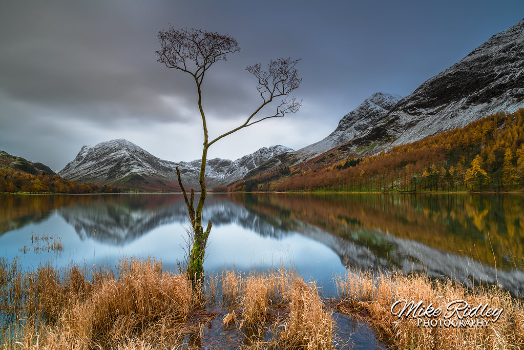 The Buttermere lone tree ..
