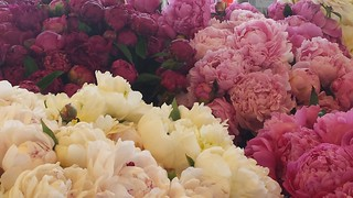 Peonies at Pike Place Markets