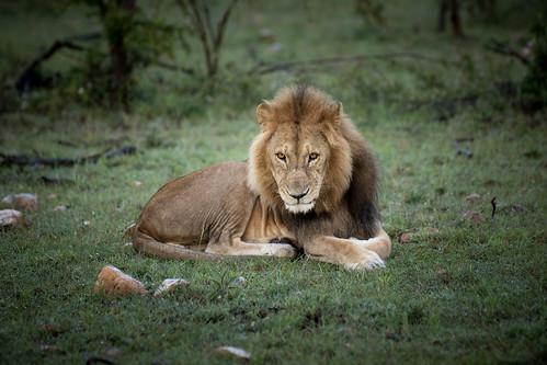 2015_06_13_Ol_Kinyei_Maasai_Mara_JPEG_RESIZED_SELECTION_0036