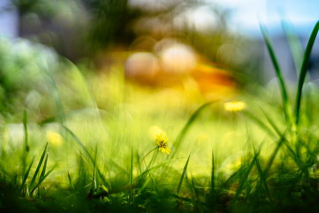 Flowers & Bokeh