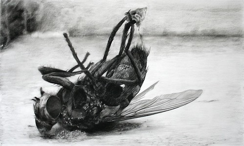 Cindy Wright, Fly, 2006