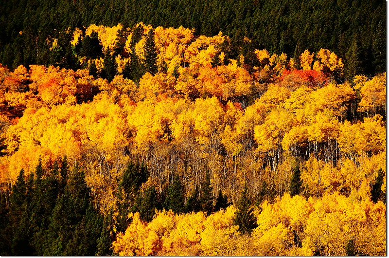 Fall colors by Peak to Peak HWY 2