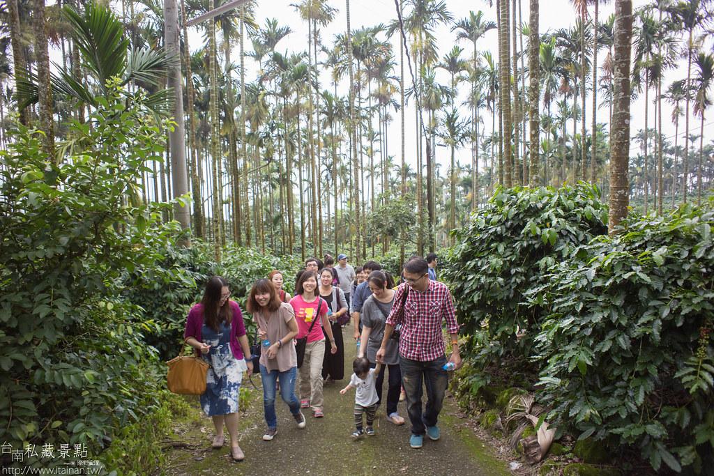 村長咖啡-天池咖啡步道 (3)