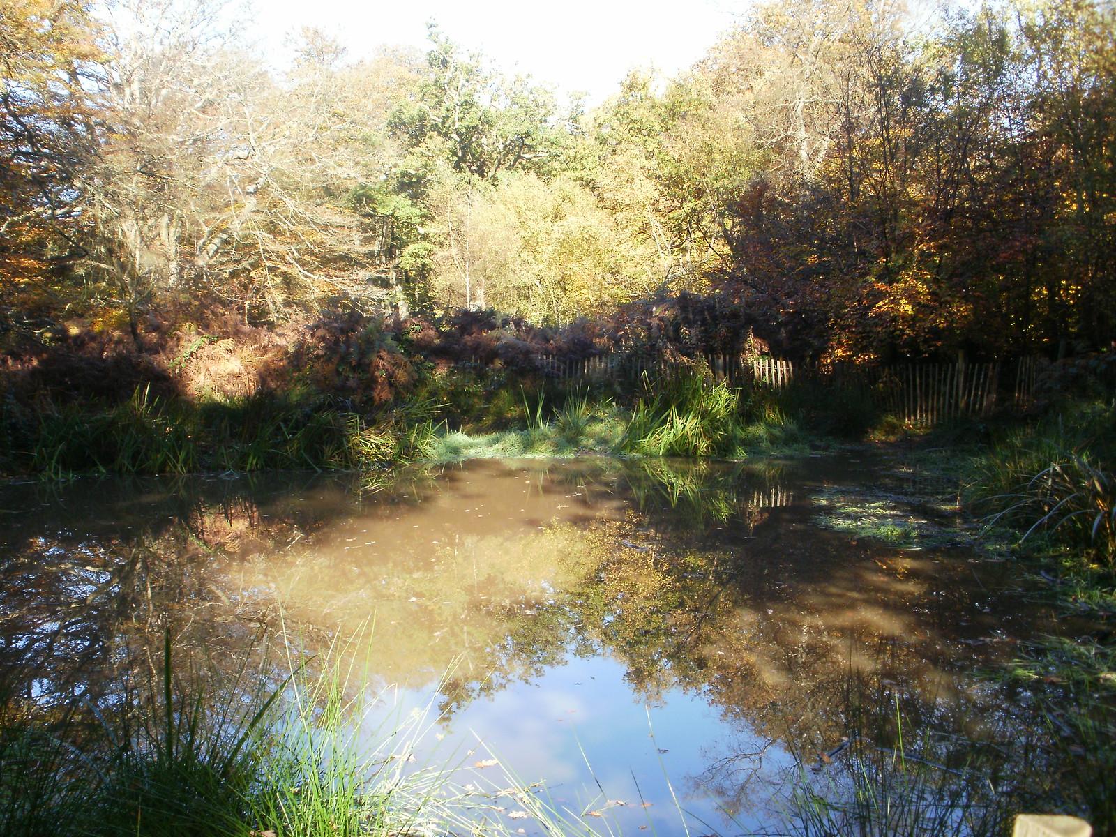Pond in Banstead Wood OLYMPUS DIGITAL CAMERA