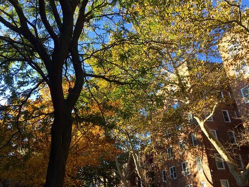 A Sunny Fall Day
