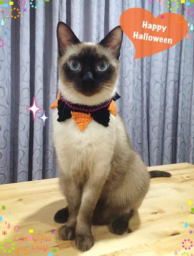 萬聖節南瓜領巾 寵物貓咪安全項圈