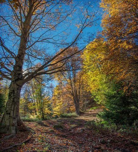 autumn mountain mountains tree nikon colours hiking herbst explore macedonia karadzica nikond5100