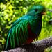 Quetzal por im.estudio