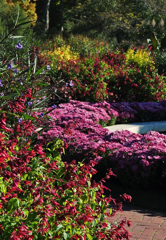 Flower Garden Walk (8)