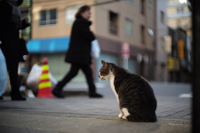 Security guard cat