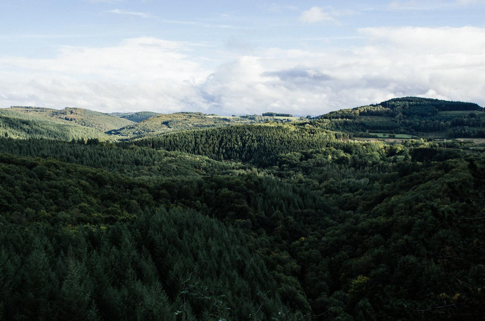 Grande traversée du Morvan - Des sapins à perte de vue