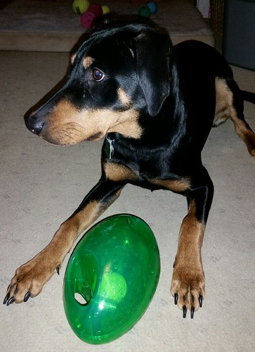 Review of Kong Holiday Jumbler Football by Lapdog Creations