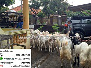 Pengiriman Massal ke Jawa Barat & Tangerang, 18 Desember 2015