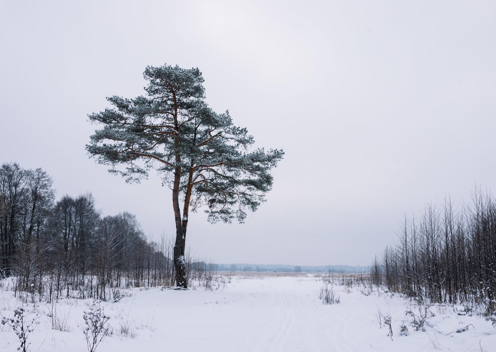 Winter @ Petushki