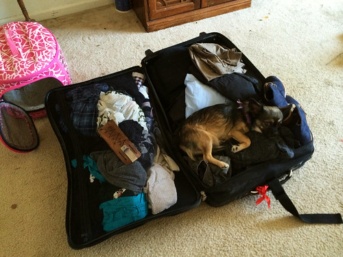 Sophie in Josh's Suitcase (August 29 2014)