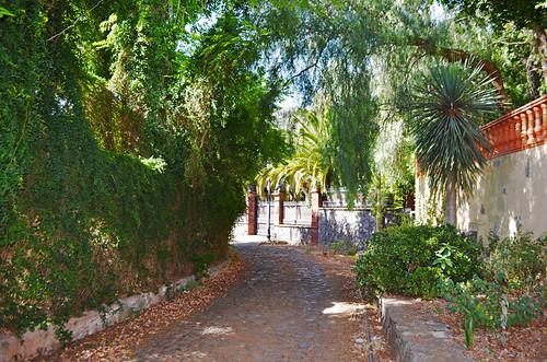 Camino de los Laureles, Tegueste, Tenerife