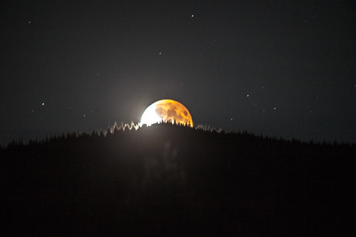 Blood Moon In The Pines