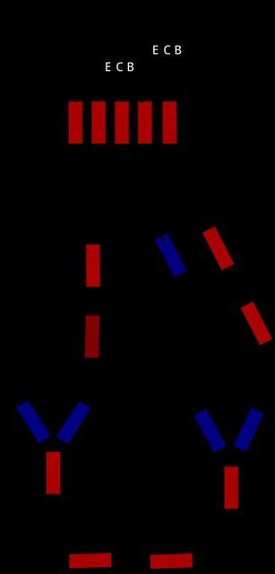 用杜邦端子作振盪電路簡圖