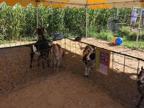 Goats and sheep at the petting zoo