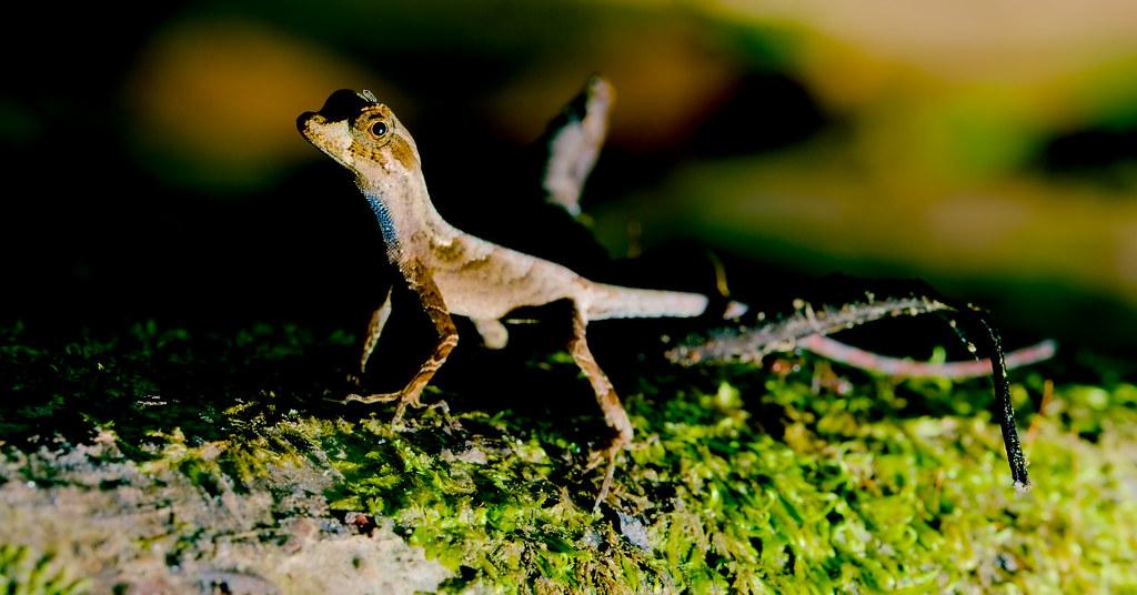Lizard_3