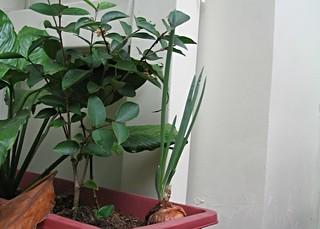 Condo Plants