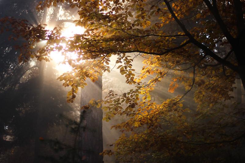 Merveilleuse rando dans les Vosges 22774852496_4ee3e81c42_c