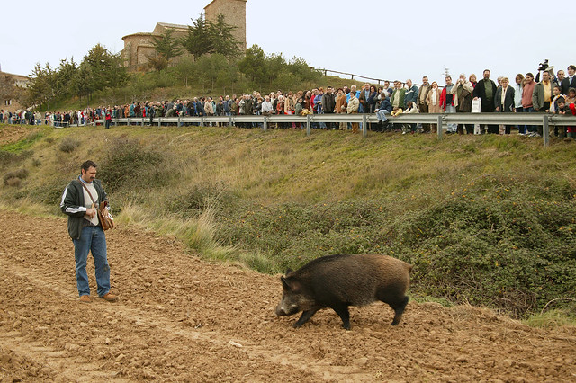 Feria de la Trufa en Imágenes (2001-2014)