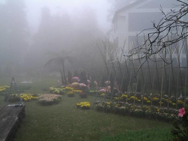 24470霧裡看花