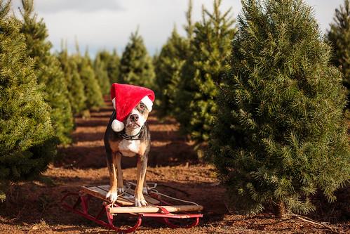 2015 Christmas-7783