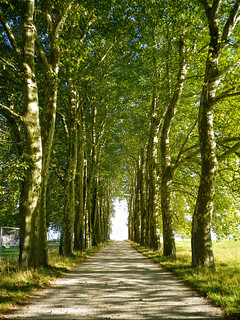 Tree-lined pathway