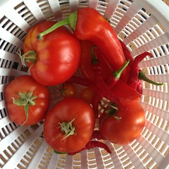 red study in tomatoes and peppers