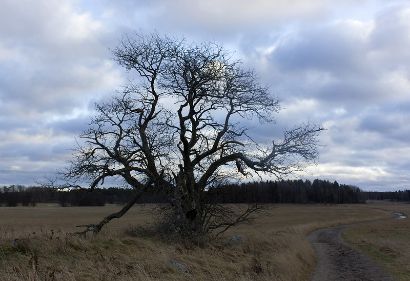 Ten Years With The Old Tree
