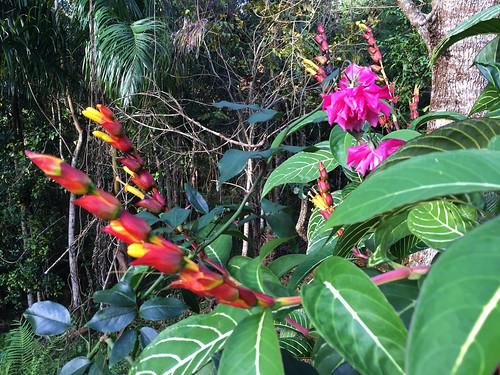 topes collantes escambray guamuhaya guamuaya montañas mountains mountain montañoso flower flor plant planta cola camarón