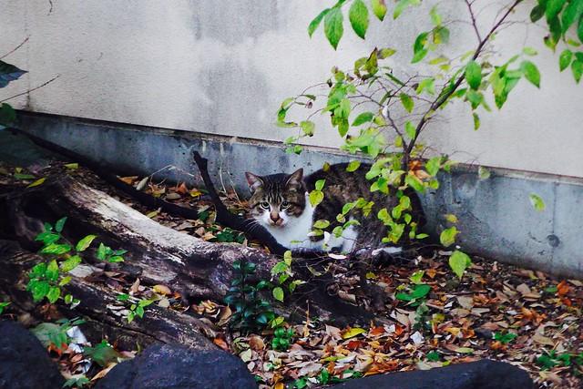 Today's Cat@2016-12-01