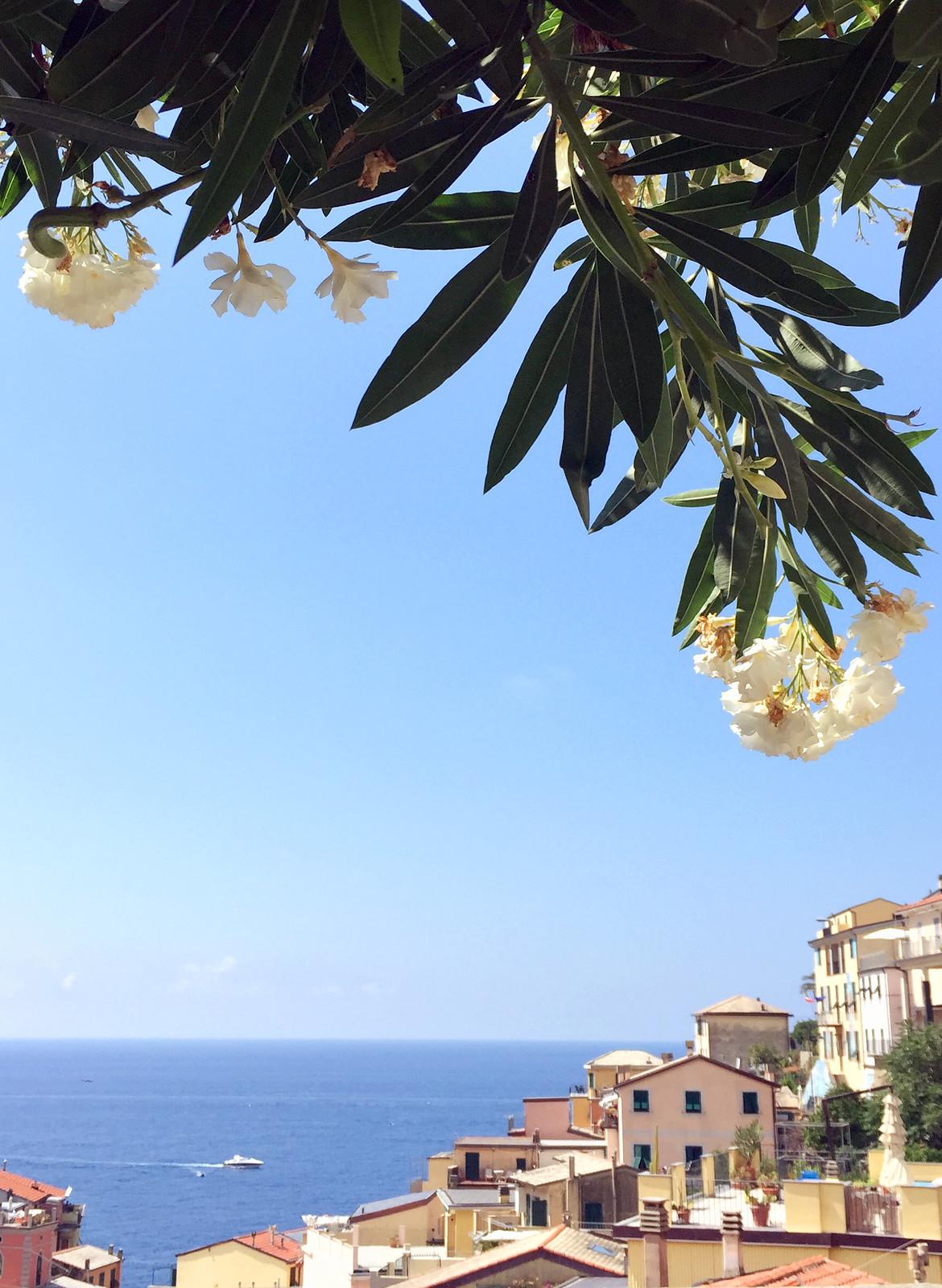Cinque Terre Riomaggiore flowers and houses